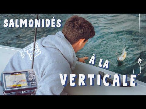 Des SALMONIDÉS En VERTICALE ! Pêche En Verticale En Lac [4k]