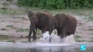 Botswana lifts ban on elephant hunting, sparking outrage
