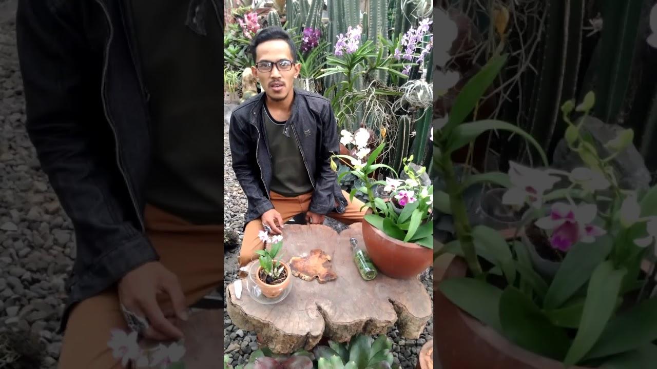 Orchid Flask Biji Anggrek Youtube Benih Bulan