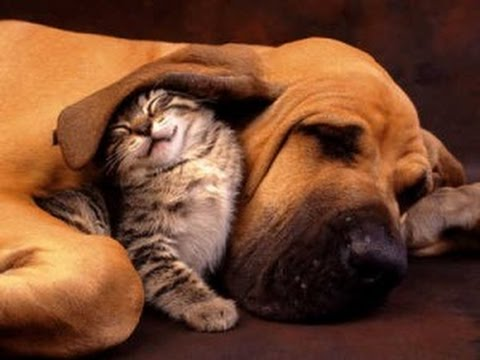 Dog Adopts and Protects Abandoned Kitten  ||  CUTE Cats and Dogs compilation- 2014-2015 [NEW]