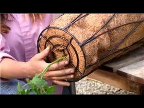 Vegetable Gardening : Unique Ways to Plant a Vegetable Garden