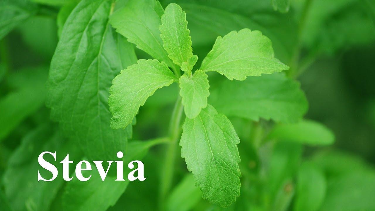 Comprar stevia com taumatina