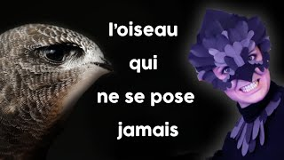 🌸 Cet oiseau ne se pose JAMAIS ! Ft Faune Alfort