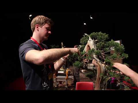 Bjorn Bjorholm Bonsai demo