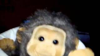 Monkey dance to 'I JUST HAD SEX'