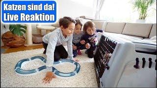 Die Katzen sind da 😍 Live Reaktion der Kinder! 1. Mal bei uns zu Hause | Eingewöhnung | Mamiseelen