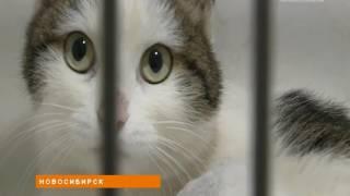 Новосибирские волонтеры спасают замученную живодерами кошку Лапушок