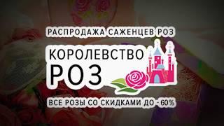 Королевство роз | Распродажа до -60% | Agro-market.ua