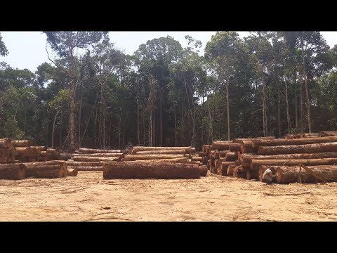 ITTO Fellowships, mapping selective logging in Brazil