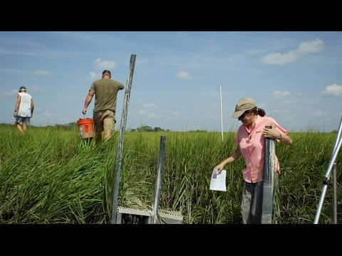 Testing the limits of saltwater intrusion