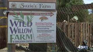 STE21 Segment 1 Wild Willow Farm