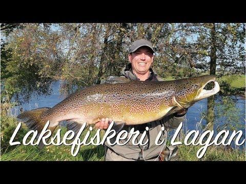 Laksefiskeri i Lagan