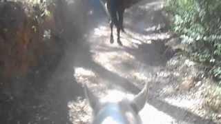 Horseriding in Mallorca mountains