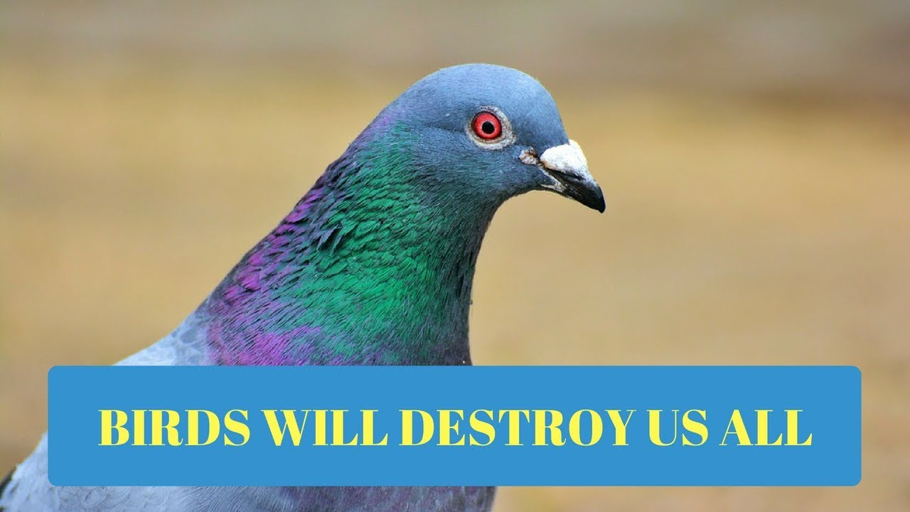 Download BIRDS ATTACKING HUMANS & INFESTING THE WORLD