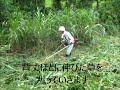 2018 7 26草刈り作業 の動画、YouTube動画。