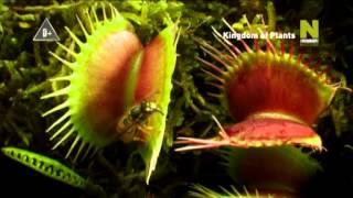 Царство растений (трейлер)