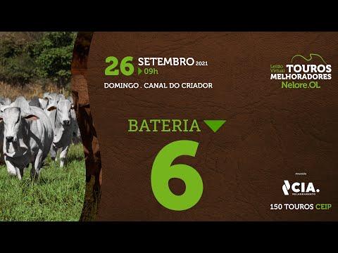 BATERIA 6 - LEILÃO VIRTUAL DE TOUROS 2021 NELORE OL - CEIP
