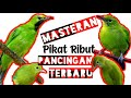 Masteran Pancingan Pikat Cucak Ijo Mini Liar Auto Ribut  Mp3 - Mp4 Download