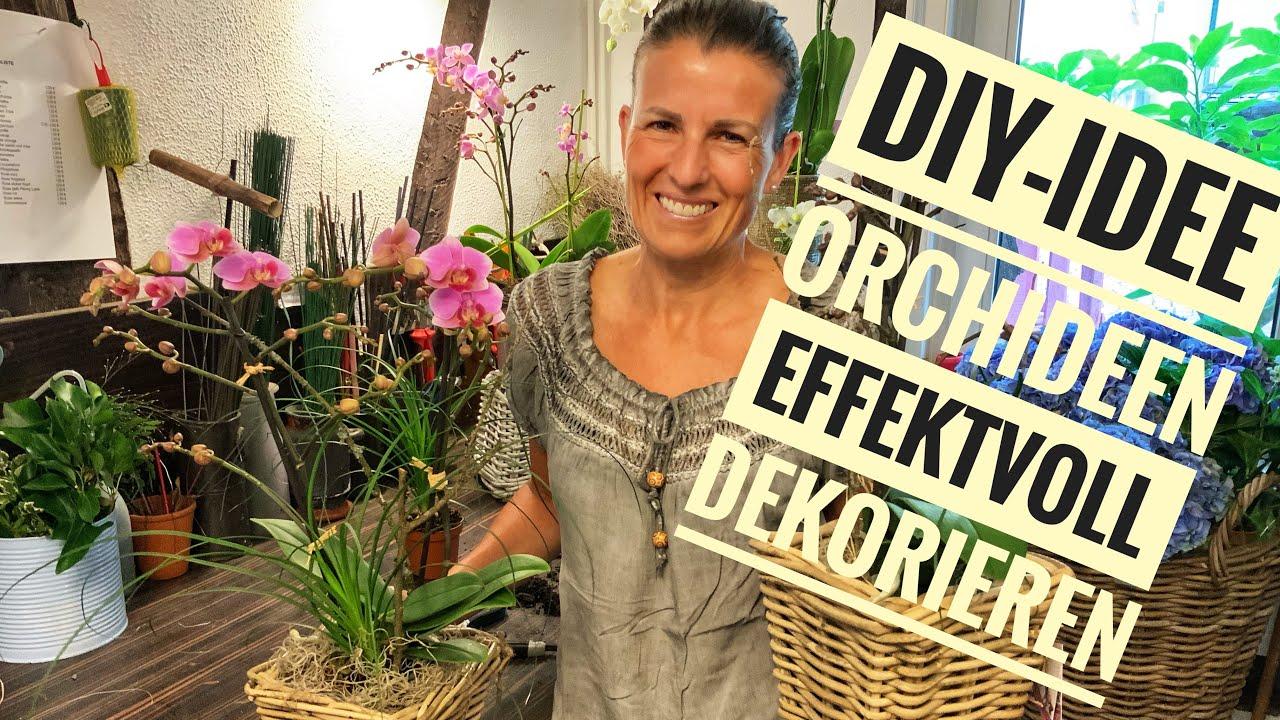 DIY-Idee: Orchideen effektvoll & natürlich in Szene gesetzt / Homedeko selber machen mit Pflegetipps