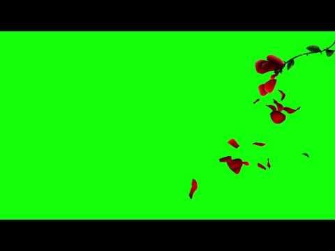 3D Falling Petals Green Screen Rose Petals [720P] thumbnail