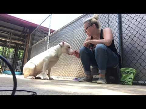 Illinois Dog Rescue - ADOPTIONS - Rescue Me!