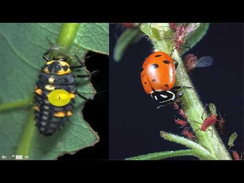 Biological Control By Dr  M  Abid Hussain, CUTM Odisha