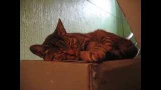Кот мирно дремлет
