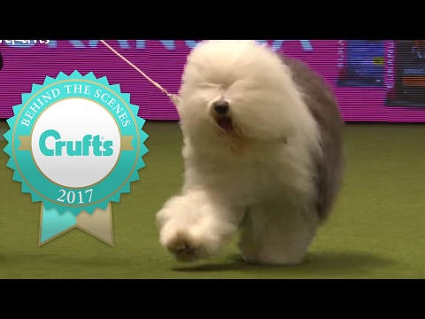 Thumbnail: Pastoral Group Winner's Interview | Crufts 2017