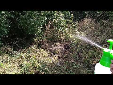 Как избавится от гнезда диких ос. Химический метод борьбы с осами.
