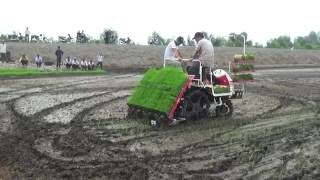 YANMAR | Transplanter operation on the field