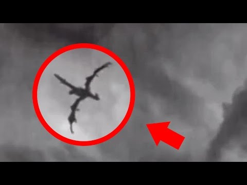 5 Dragons Caught on Tape