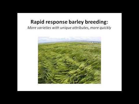Developing Barley for Food, Feed, and Malt--The Oregon Experience:  2015 VT Grain Growers Conference
