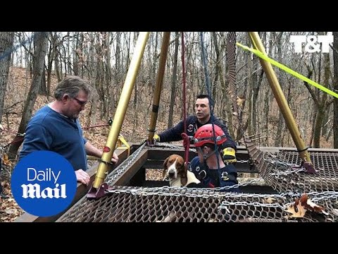 Heroic firefighters hoist dog from disused mine in Missouri - Daily Mail