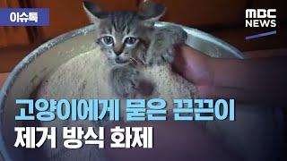 [이슈톡] 고양이에게 묻은 끈끈이 제거 방식 화제 (2…