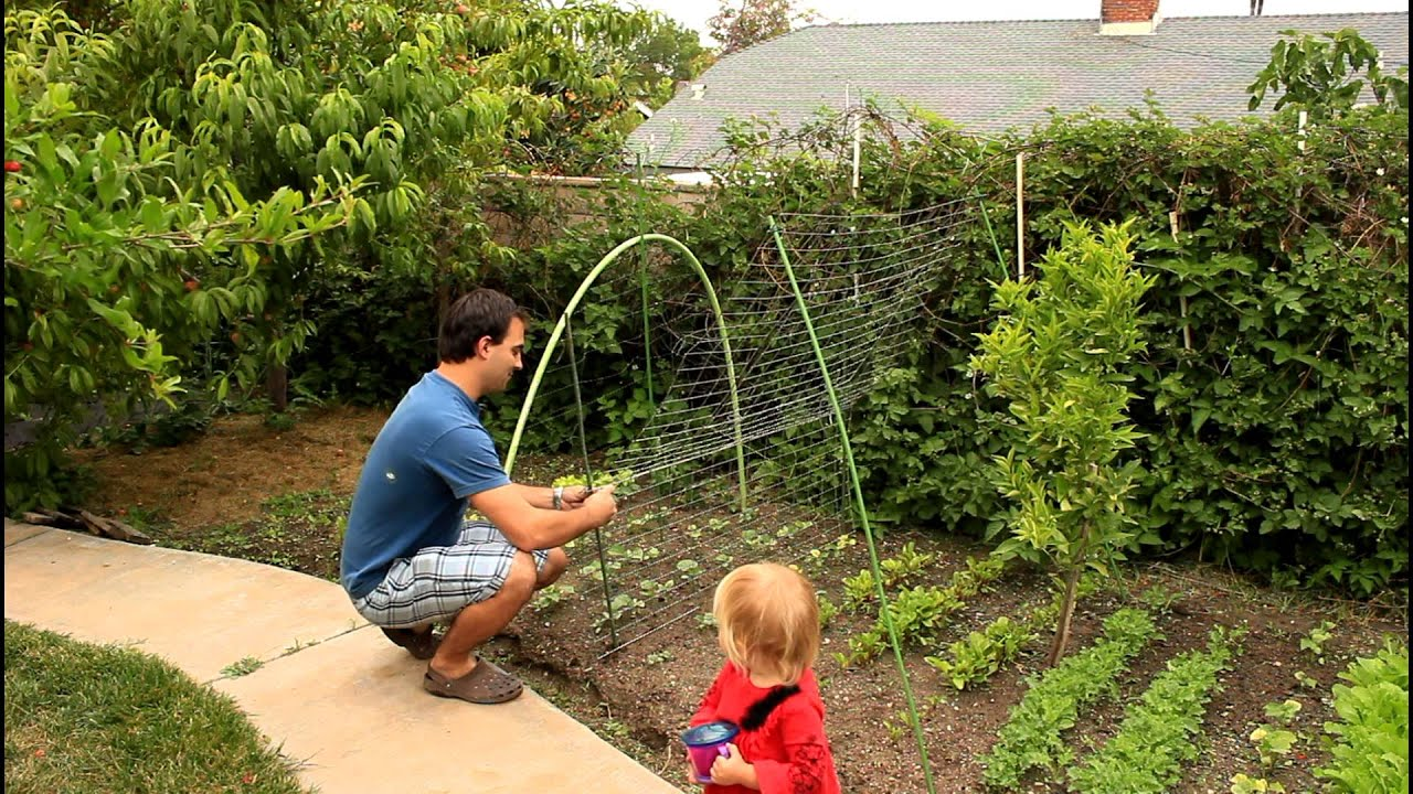 Vegetable Trellis Ideas Part - 22: Easy And Simple Cucumber Trellis For Vertical Growing By The California  Gardener