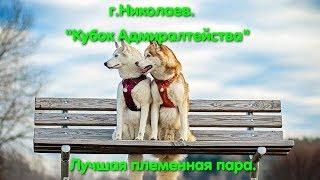 Выставка собак Николаев. Лучшая племенная пара. Собаки. Немецкая овчарка. Собаки Украины. DOG VLOG.