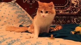 Котик Вася ищет хозяев