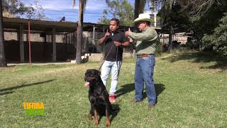 Tierra Fértil Tv Escuela de entrenamiento canino en la raza Rottweiler (12.12.20)