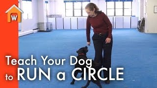 Teach Your Dog To Run A Circle Around You