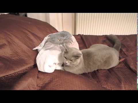 """Poor Kitty Should Have Never, Ever Trusted This """"Plastic Bag"""""""