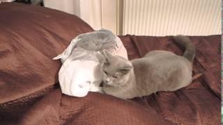 Cat fail - plastic bag