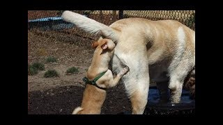 Funny Videos Of Animals Doing Stupid Things 2017《Part 3》 🐾