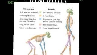 Hominoids to Hominins Part 1