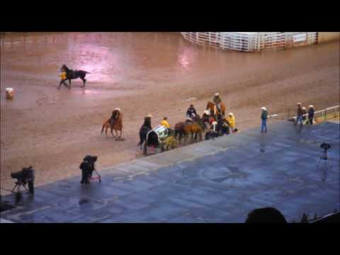 Horses Crash Headlong Into Stage at 2016 Calgary Stampede