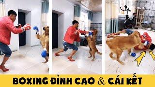 Tik Tok Chó mèo hài hước🐶😻 Màn Boxing đỉnh cao & cái kết