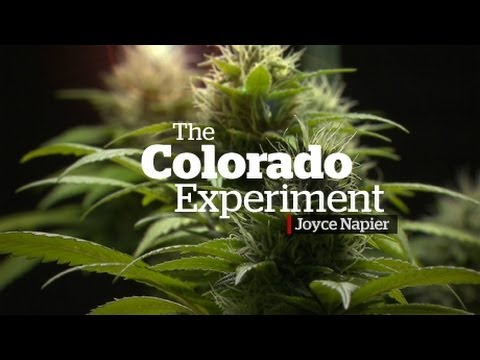 The Colorado Marijuana  Expertiment