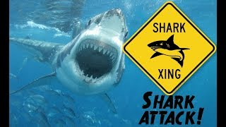 Serial Great White Sharks Or Rogue Shark?
