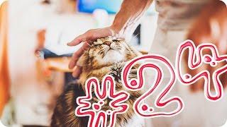 Приколы с животными №24   Ласковые киски 2  Смешные животные  Animal videos