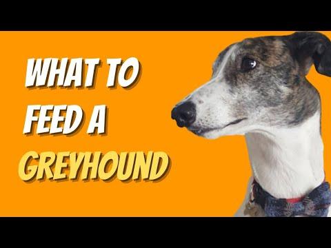Adopting a Greyhound - The dog's dinner