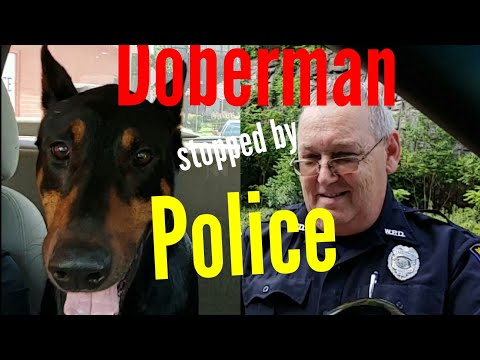 Pulled over by Police with Dog in the Car - Doberman Vlog